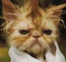 hair hairs haircut animal