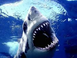 Sharks – Serial Killers Of The