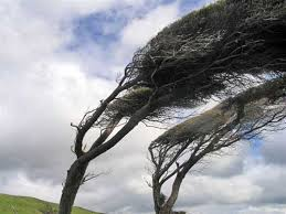 windy-nugget-point