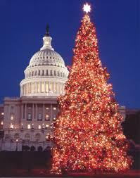 ... Christmas trees ...