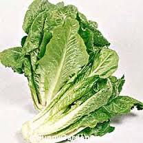 'Romaine' or Cos Lettuce