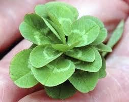 21-leaf clover