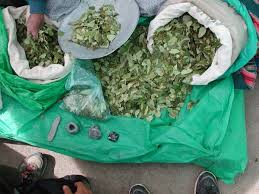 Coca leaves for sale