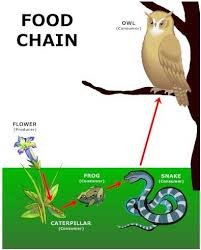 food-chain Conversely, each level ...