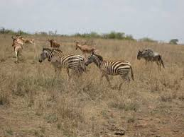 ... free in the Nairobi Game Park.