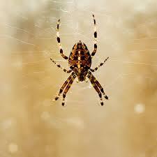 Spider: