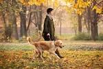 What Makes You Go For A Walk | Retriever Life : Retriever Life