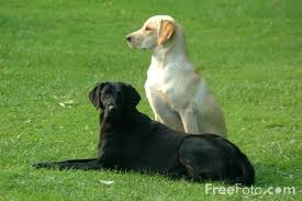Picture of Pair of Dogs - Free ...