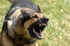 """dog, but it still barks,"""""""