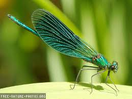 Dragonflies are reminders that