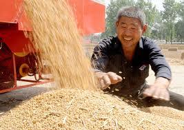 bumper harvest of grain,