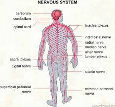 038-nervous-system