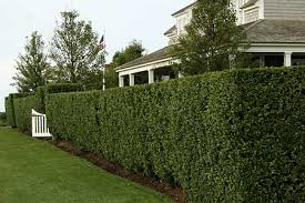 Hedge Trimming a service by